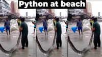Watch: Python rescued from Mahim beach in Mumbai