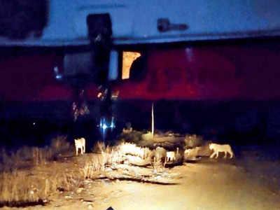 Gujarat: Baby born in ambulance as lions block road