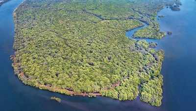 Mission mangroves
