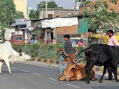 RFID puts brakes on cattle nuisance