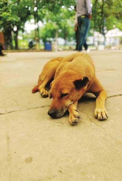 Pet Puja: Let sleeping dogs lie