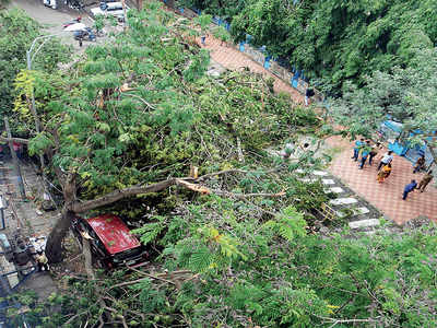 Tree Committee to push for removal of old trees