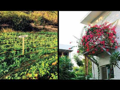 'Local soil benefits garden landscapes'