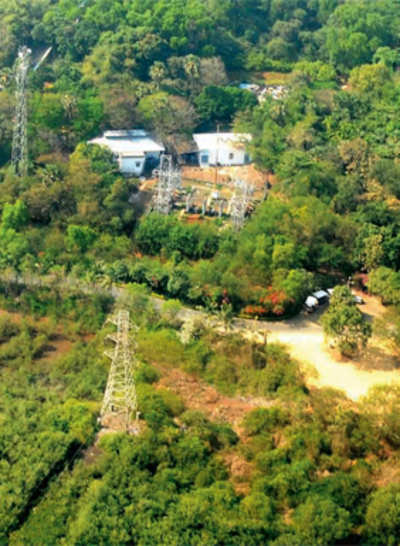 Expert panel gives go-ahead for power line; 50,000 trees in Kodagu forests will go