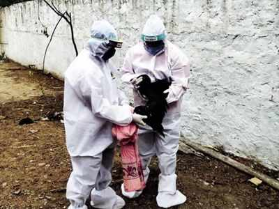 Bird flu outbreak live updates: Poultry markets in Delhi to open after samples test negative for avian influenza