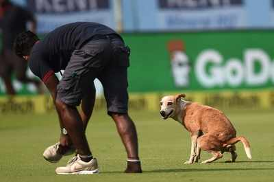 Vizag dog steals the show with full SWAG and twitter cannot stop talking about it