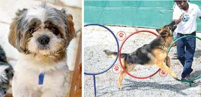 Five-star facilities for dogs in Bengaluru; because pooch pooch hota hai