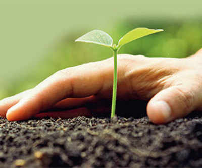 Sow green seeds