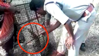 Forest officials release 75 Monitor lizards rescued from Andhra Pradesh fish market
