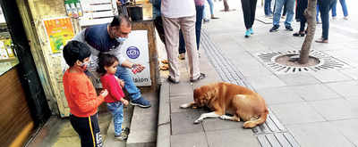 NCP wants exclusive feeding locations for stray animals in city
