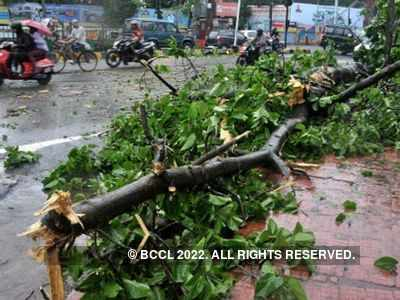 Thane: Two killed as tree collapses on them in heavy rain