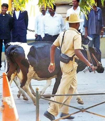 Bengaluru police's 'most wanted' is a cow