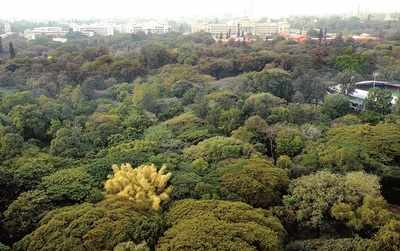 Choppers, stop! Attempt to amend Karnataka Tree Preservation Act has Bengaluru seething