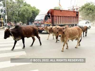 Now, death certificate to be issued for cremation of cows