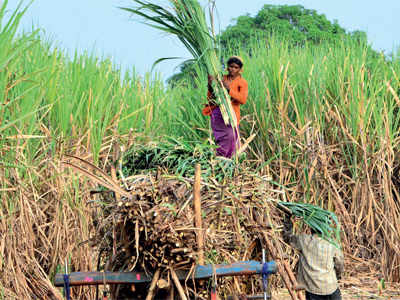 State to buy 25% of sugar produced by cooperatives