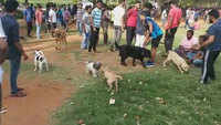 Hyderabad: A park where dog lovers meet every Sunday