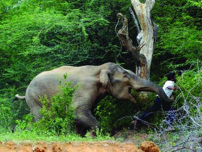 Karnataka: A jumbo conflict zone