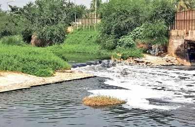 Bengaluru's Varthur lake is drying up