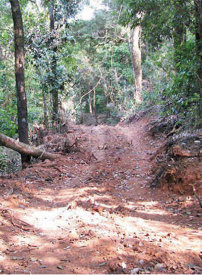 A road to eco disaster? Govt mulls highway through forest