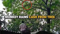 Watch: Monkey snatches bag, rains cash from trees