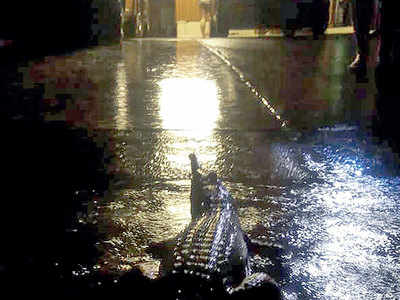 Oz military on streets as floods bring crocs out