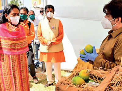 Mangoes, not Covid situation, interest Mayor Bijal Patel