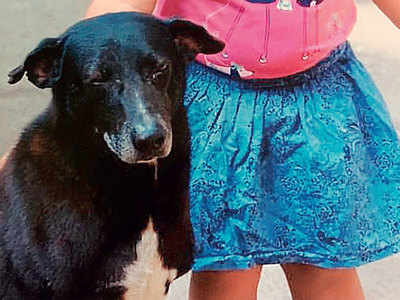 Bandra high-rise families spar after dog is killed