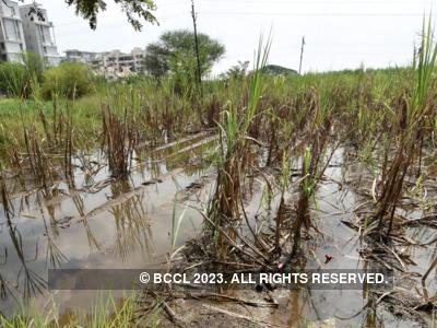 Agitation soon if no relief to rain-hit farmers, warns Akhil Bharatiya Kisan Sabha