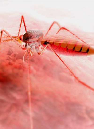 The dreaded Dengue returns and you can't count on platelets