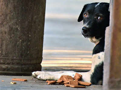A dog's curious routine at Kanjurmarg station