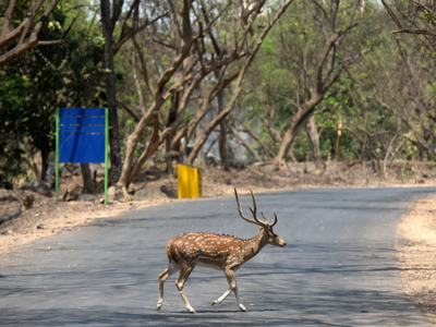 The Jungle has come alive: Borivali national park reclaims its' lost glory as lockdown continues