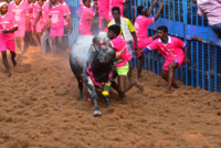 Jallikattu season kicks off in Pudukottai district, 13 injured