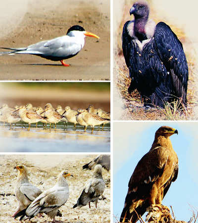 Counting on conservation