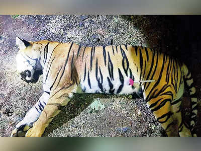 In search of Avni's cubs