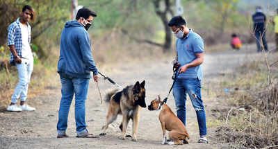 PIL in HC to revoke dog walking rules