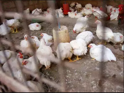 Bird flu cases spread to six states, Centre calls for awareness on safety of poultry products