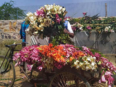 Millions Of Flowers Destroyed By Farmers Across India For Lack Of Demand