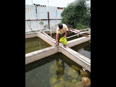 PMC fumigates mosquito menace from Kharadi