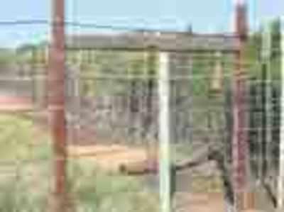 Railway scrap to be used to stop straying jumbos