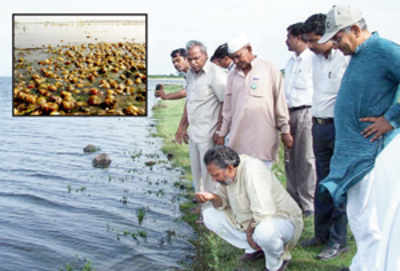 Ujani dam is full of toxins, finds survey