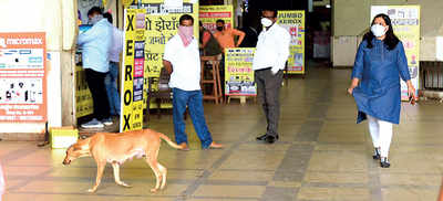 Mega Centre in Hadapsar wants its stray dogs out