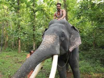World Wildlife Day 2021: Pulkit Samrat shares his experience bonding with Unni - the elephant