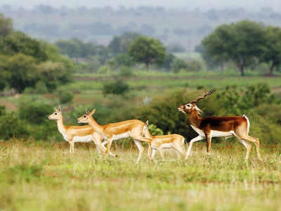 Mayureshwar being turned into sanctuary for grassland species
