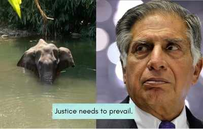 Ratan Tata condemns elephant killing in Kerala; says 'Justice needs to prevail'