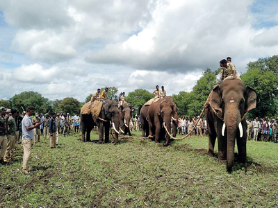 Activists go wild over jumbo patrolling plan