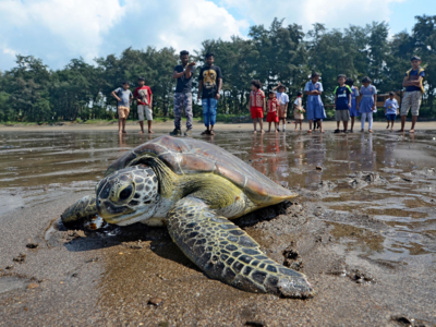 Goa government to promote turtle nesting sites on state's beaches