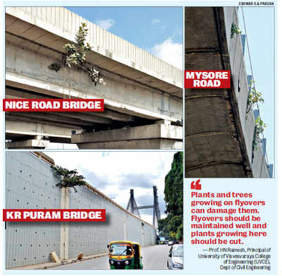 Are Bengaluru's bridges safe? Spot check reveals worrying picture