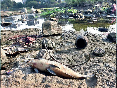 For 3rd time in week, dead fish rise in masses at Pavana river