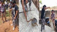 On cam: 6-ft-long rat snake rescued in Odisha