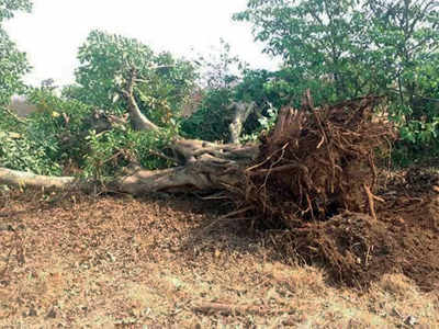 55,000 trees to be axed for second Goa airport